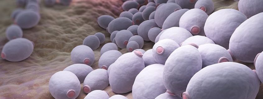 candida schimmelinfectie